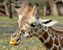 Happy Thanksgiving! Today is one of only three days a year that the Detroit Zoo is closed