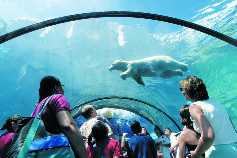 Vote every day for the Detroit Zoo's Arctic Ring of Life as USA TODAY's Best Zoo Exhibit! The contest ends tomorrow – please SHARE and tell your friends to VOTE! http://bit.ly/1CNbbfc