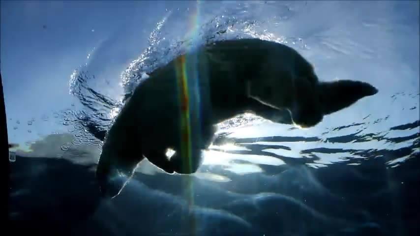 Morning swim.